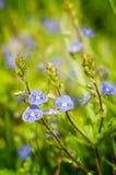 Bloem op het gras Royalty-vrije Stock Foto's