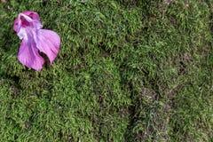 Bloem op het mos royalty-vrije stock afbeeldingen