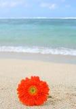 Bloem op het strand Royalty-vrije Stock Foto's