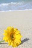 Bloem op het strand Royalty-vrije Stock Foto