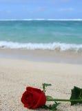 Bloem op het strand royalty-vrije stock afbeelding