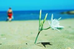 Bloem op het zand Stock Foto's
