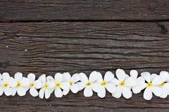 bloem op hout Royalty-vrije Stock Afbeelding