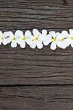 bloem op hout Royalty-vrije Stock Fotografie