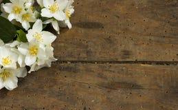 Bloem op houten achtergrond Stock Afbeeldingen