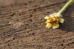 Bloem op houten plank Royalty-vrije Stock Foto's