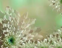 Bloem op onscherpe turkoois-groen-roze halftone achtergrond Blauw-witte bloemenchrysant bloemencollage De samenstelling van de bl Stock Foto's