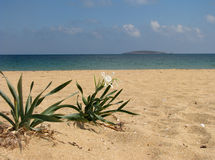 Bloem op strand 3 stock foto's
