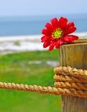 Bloem op zeevaartpost Royalty-vrije Stock Foto