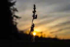 Bloem op zonsondergangachtergrond Stock Afbeelding
