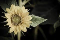 Bloem op zwart bloemontwerp Royalty-vrije Stock Afbeeldingen