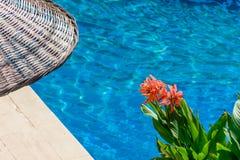 Bloem, paraplu en zwembad royalty-vrije stock fotografie