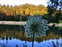 Bloem, rivier, bezinning en aard Royalty-vrije Stock Afbeelding