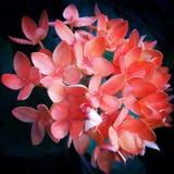Bloem in rood stock foto's
