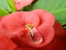 Bloem in rood royalty-vrije stock foto's