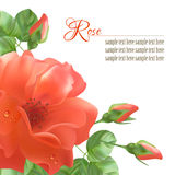 Bloem Rose Vector Background Royalty-vrije Stock Afbeelding