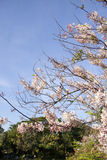Bloem roze boom Stock Afbeelding