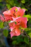 Bloem roze en groene bladeren Stock Foto