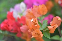 Bloem roze toekomst royalty-vrije stock fotografie