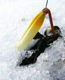Bloem in sneeuw Stock Foto's