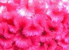 bloemtextuur Royalty-vrije Stock Afbeelding