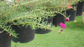 Bloem in tuin stock footage