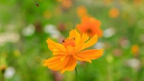 Bloem in tuin Stock Foto