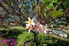 Bloem in tuin Stock Afbeelding