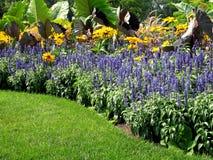 bloem in tuin Royalty-vrije Stock Foto