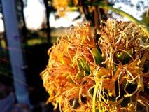 Bloem van agave Royalty-vrije Stock Afbeelding