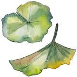 Bloem van de waterverf de kleurrijke lotusbloem Bloemen botanische bloem Geïsoleerd illustratieelement vector illustratie