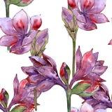 Bloem van de waterverf de purpere amaryllis Bloemen botanische bloem Naadloos patroon als achtergrond Royalty-vrije Stock Fotografie