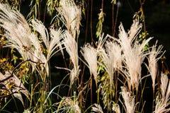 bloem van grasslingering met winst royalty-vrije stock foto
