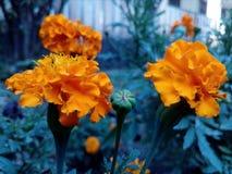 bloem van heldere mening Stock Foto's