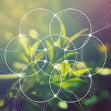 Bloem van het leven - het met elkaar verbinden omcirkelt oud symbool voor vage photorealistic aardachtergrond heilig Stock Afbeeldingen