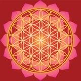 Bloem van het leven in rode lotusbloem Stock Foto's