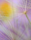 Bloem van het paardebloem de abstracte macrodetail in violette kleur Royalty-vrije Stock Afbeeldingen