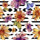 Bloem van het waterverf de kleurrijke Afrikaanse madeliefje Bloemen botanische bloem Naadloos patroon als achtergrond vector illustratie