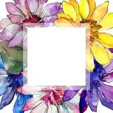 Bloem van het waterverf de kleurrijke Afrikaanse madeliefje Bloemen botanische bloem Het ornamentvierkant van de kadergrens royalty-vrije illustratie