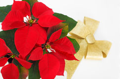 Bloem van Kerstmis de rode poinsettia en gouden lint Royalty-vrije Stock Foto
