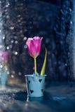 bloem van roze tulpen Stock Fotografie