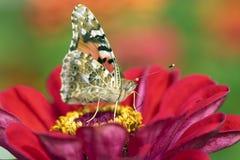 Bloem van Tuin met een vlinder Royalty-vrije Stock Afbeeldingen