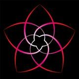 Bloem van Venus Red Black Background Stock Foto's