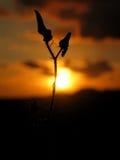 Bloem van Zon stock afbeeldingen