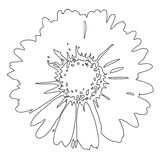 Bloem (vector) Royalty-vrije Stock Afbeeldingen