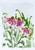 Bloem, vectorillustratie Royalty-vrije Stock Foto