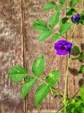 Bloem violette achtergrond Royalty-vrije Stock Afbeelding