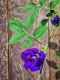 Bloem violette achtergrond Royalty-vrije Stock Foto