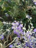 Bloem, viooltje, groen gras, bloemen stock afbeelding