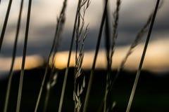 Bloem voor de zon Stock Foto's